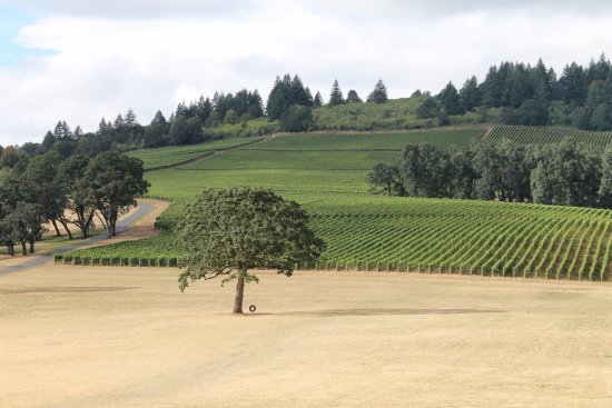 Oregon Wine Tours: Gorgeous afternoon at Stoller