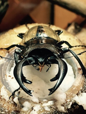 Ishikawa-ken Insectarium