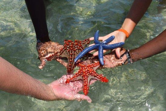 Watamu Beach: stelle marine