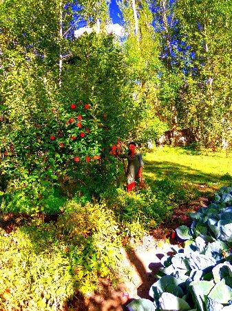 Apple Garden. - Picture of Leh Stumpa, Leh - TripAdvisor