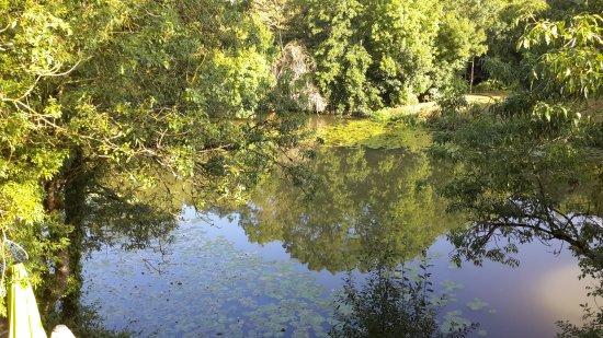 Velluire, Prancis: Les arbres qui se regardent dans la rivière au matin