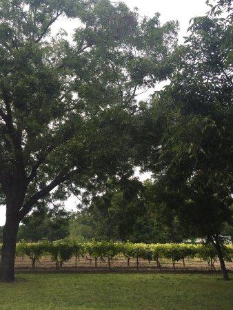 Val Verde Winery: photo2.jpg