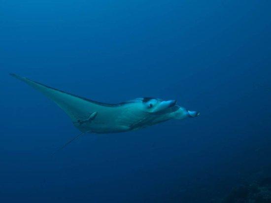 Manihi, Polynésie française : Une rencontre toujours magique...