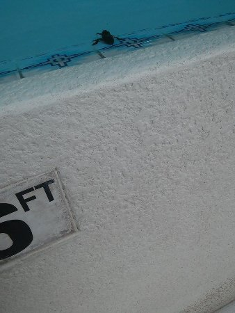 Benson, Arizona: Huge bug in pool tried to crawl up my leg