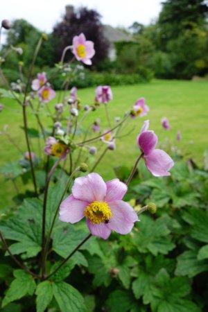 Malleny Garden: Flowers