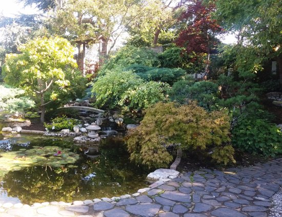 capel manor gardens capel manor enfield japanese garden