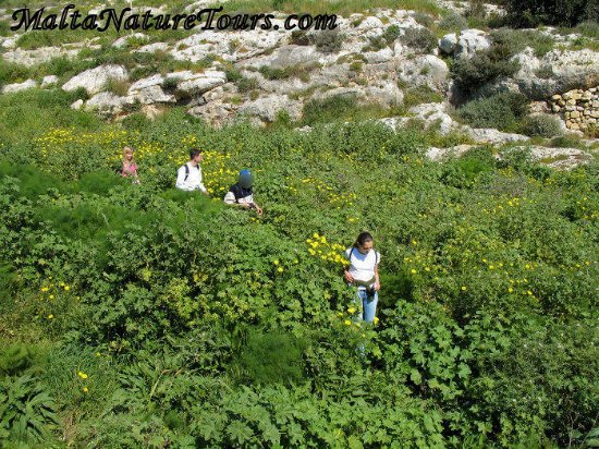 Xewkija, Μάλτα: Photo during one of our walks at Mgarr ix-Xini