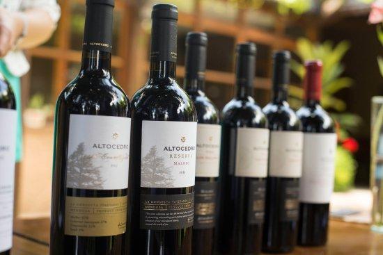 Coquimbito, Argentina: Altocedro Wines in AMP Cava