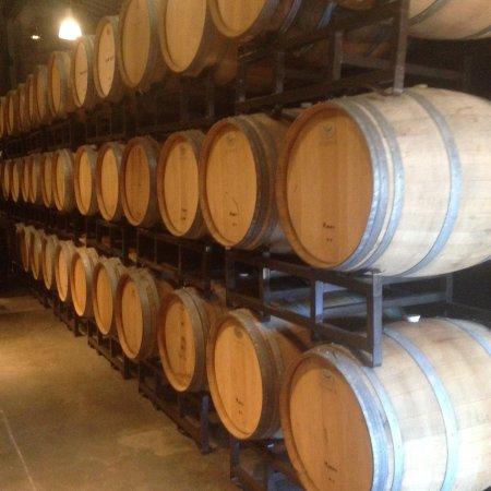 Louis M. Martini Winery: wine barrels in tasting room