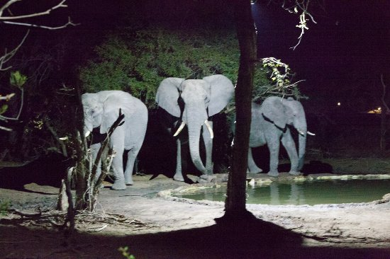 Manyeleti Game Reserve, África do Sul: The view whilst having dinner