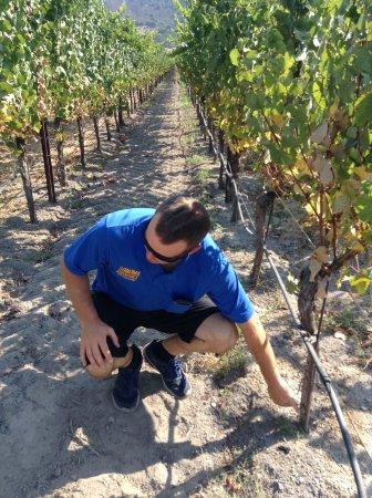 Sonoma Segway: Hunt educating us on grafting