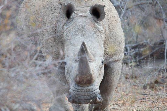 Mohlabetsi Safari Lodge: Amazing Animal