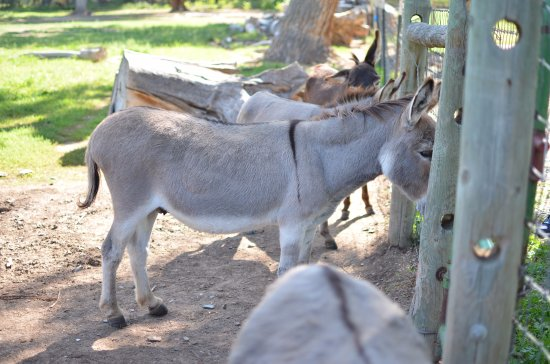 Pojoaque, NM: Donkeys.