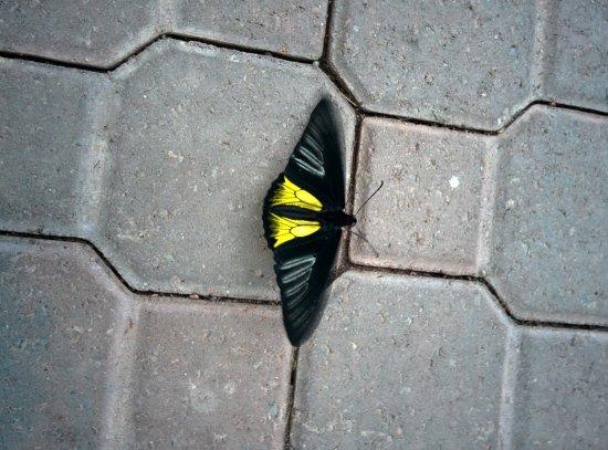 Deer Lake, Canadá: More butterflies