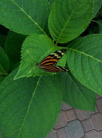 Deer Lake, แคนาดา: More butterflies