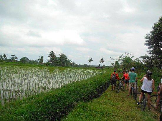 Bali Rocky Mountain Cycling Tour : Magnifique paysages meme par temps gris