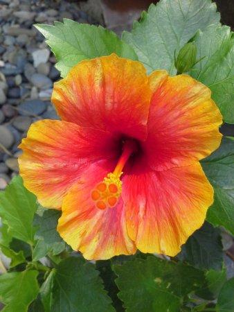 Casa Ki: Tropical Garden