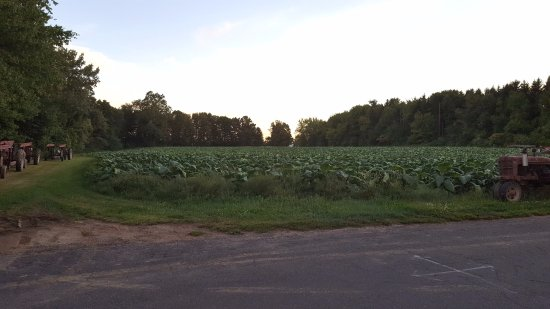 Suffield, CT: Farmers Field
