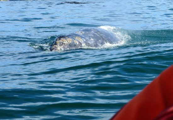 Depoe Bay, OR: Orange is the life vest of the person sitting next to me. That's how close the whale was.