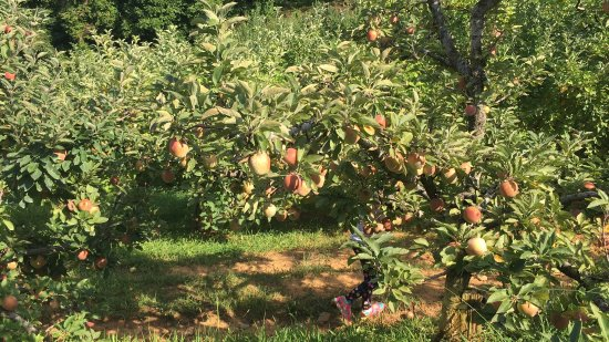 Red Apple Barn (Ellijay) - All You Need to Know BEFORE You ...