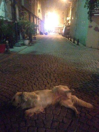 Cheers Hostel: Doggie