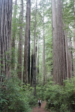 Orick, Californië: 신비의 숲길