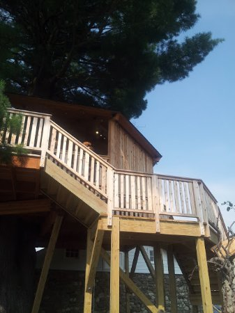 Walden, NY: The tree house