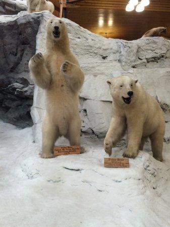 Hamburg, PA: Polar bear exhibit