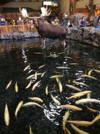 Hamburg, PA: Koi pond with the moose.