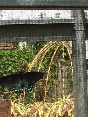 Naples Botanical Garden: Butterfly house
