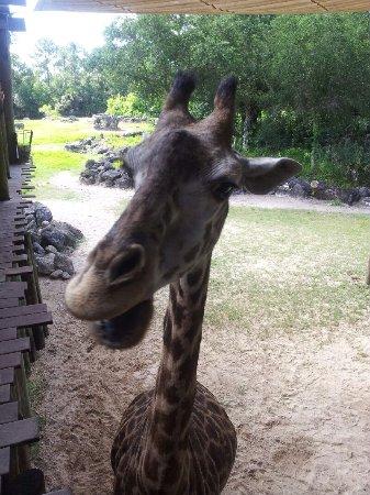 Brevard Zoo Photo