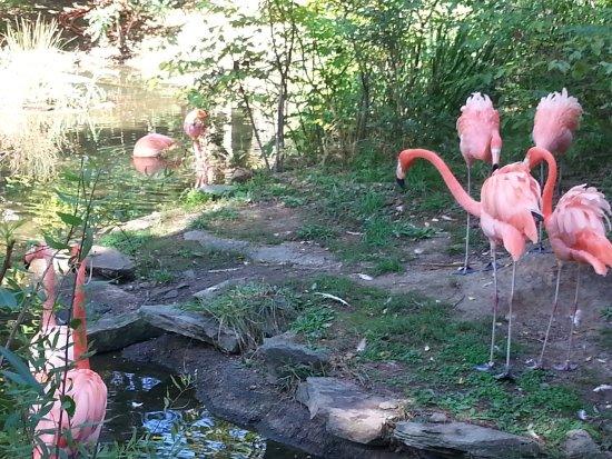 Pittsburgh Zoo & PPG Aquarium: Stunning flamingos at the water....