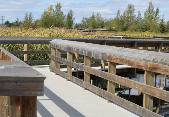 St. Albert, Canadá: The boardwalk is solid and winds its way through the wetlands.