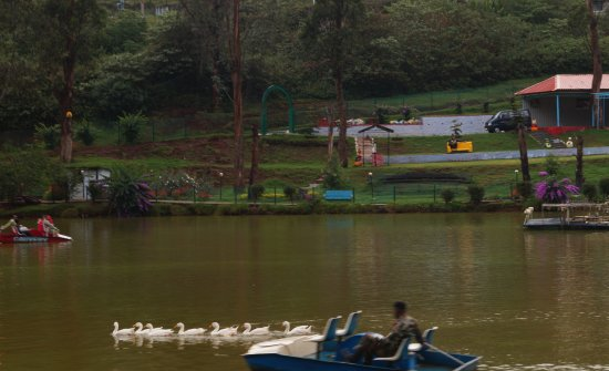 Coonoor, Índia: the lake offers pleasant environment along with boating facilities and children park.