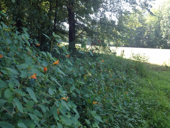Henderson, Tennessee: wildflowers at chickasaw