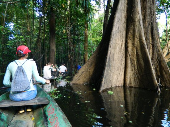 Amazonia Expeditions' Tahuayo Lodge: Canoeing through trees in the flooded forest.