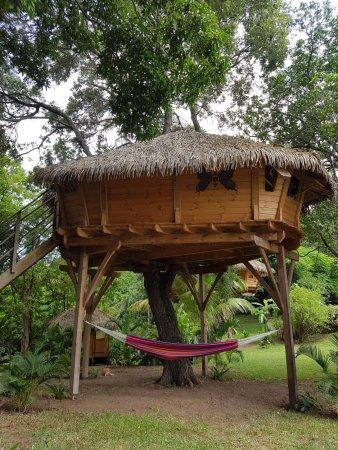 Vieux-Habitants, Guadeloupe: La cabane de Zoé vue du sol
