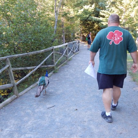 Shubenacadie Wildlife Park: Me and a friend, they are all over the place