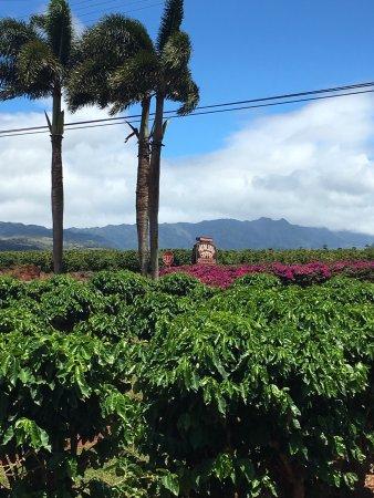 Kalaheo, Гавайи: photo1.jpg