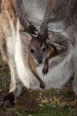 New born joy in the Grampians National Park