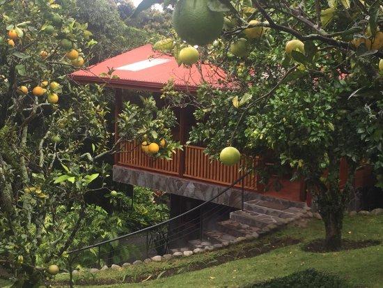 Arco Iris Lodge : photo2.jpg