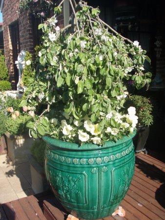 Gardenalia Open Garden: Wandin Pride Standard Apple and Primrose pansies