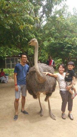 PD Ostrich Show Farm: IMG-20160913-WA0020_large.jpg