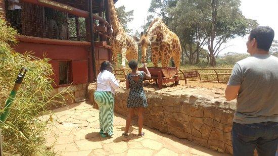 African Fund for Endangered Wildlife (Kenya) Ltd. - Giraffe Centre: 20151016_130422_large.jpg