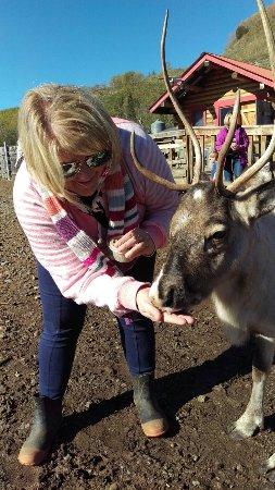 Reindeer Farm: IMAG8088_large.jpg