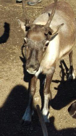 Reindeer Farm: IMAG8097_large.jpg
