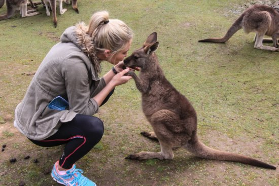 Taranna, Australië: Jack the Wallaby