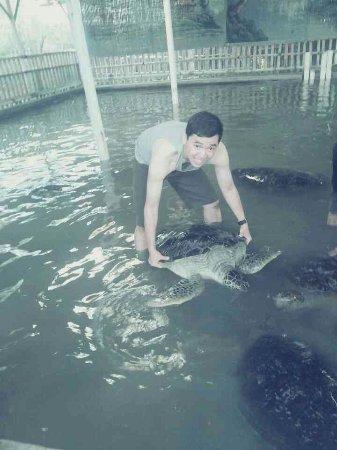 Bali Turtle Conservatory: 1406771815651_large.jpg