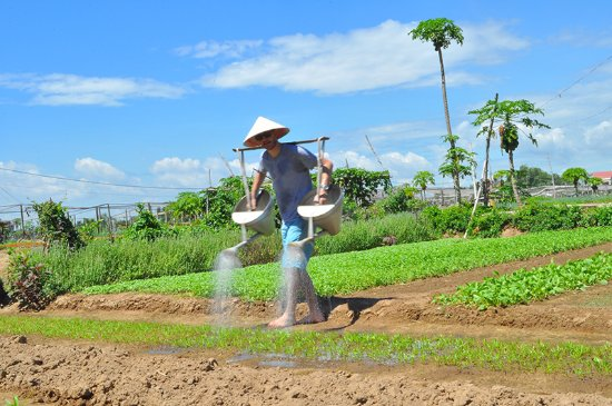 Hoi An Guided Tours