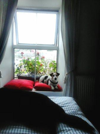 Heart of Oak: Ollie settling in on the window seat